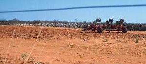 Trial plot of Bt cotton on Shamrock Gardens, south of Broome in Western Australia's Kimberley region. Photo by Merrill Findlay, 1998.