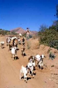 A young EPLF fighter on goat duty. Photo by Merrill Findlay, 1988.