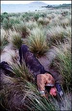 Big Dog Island, Bass Strait, Tasmania. Photo by Sandy Scheltema, 1998.