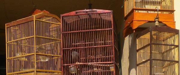 cagedbirds_cisarua_dscn2987